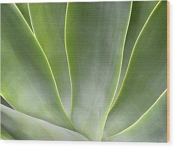 Agave Leaves Wood Print