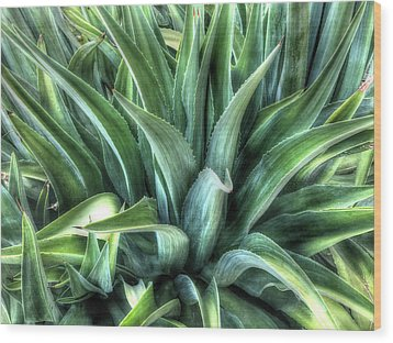 Wood Print featuring the photograph Agave by Lynn Geoffroy