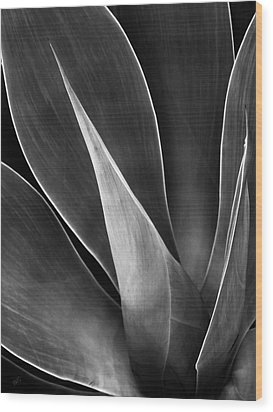 Agave No 3 Test Wood Print by Ben and Raisa Gertsberg