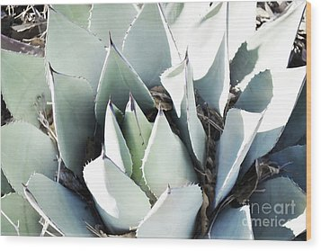 Wood Print featuring the photograph Agave Plant Leaves by Andrea Hazel Ihlefeld