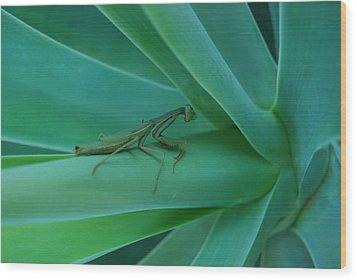 Agave Praying Mantis Wood Print