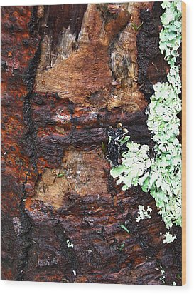 Age Scars Nor Attacks Can Mar Her Beauty Wood Print