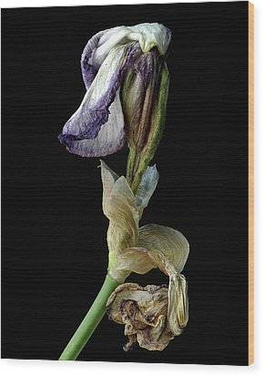 Wood Print featuring the photograph Aging Iris by Art Shimamura