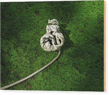 Aguished Leaf Wood Print by Douglas Barnett