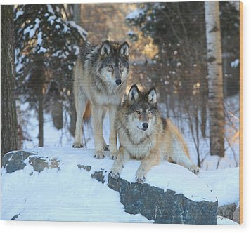 Aidan And Denali-brothers Forever Wood Print by Gerry Sibell