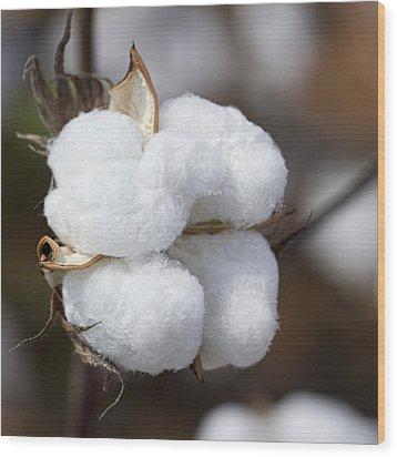 Alabama Cotton Boll Wood Print