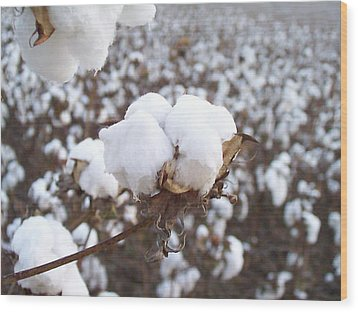 Alabama Cotton Bowl Wood Print by Paula Ferguson