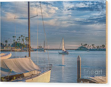 Alamitos Bay Inlet Sailboat Wood Print by David Zanzinger