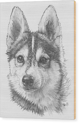 Alaskan Klee Kai Wood Print by Barbara Keith