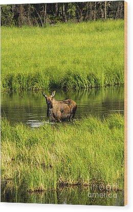 Alaskan Moose Wood Print