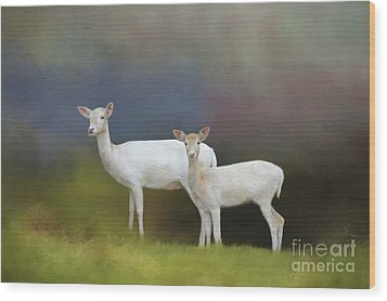 Albino Deer Wood Print by Marion Johnson