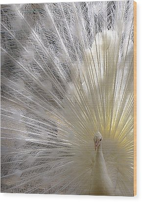 Pure White Peacock Wood Print