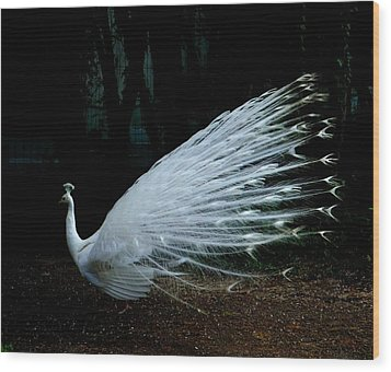 Albino Peacock Wood Print by Yvonne Ayoub