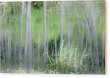 Alder Reflections Wood Print by Sheila Ping