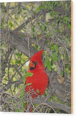 Alert Cardinal Wood Print