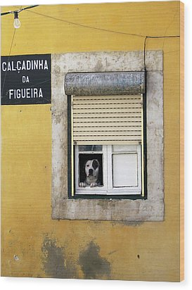 Alfama Dog In Window - Calcadinha Da Figueira  Wood Print