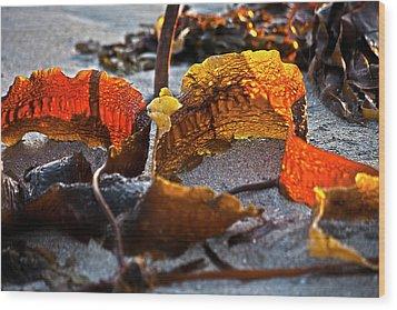 Algae At Low Tide Wood Print by Heiko Koehrer-Wagner