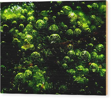 Algae Bubbles Wood Print by Catherine Natalia  Roche