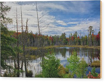Algonquin In Autumn Wood Print by Irwin Seidman