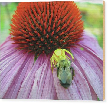 Wood Print featuring the photograph Alien Spider Having Lunch by Randy Rosenberger