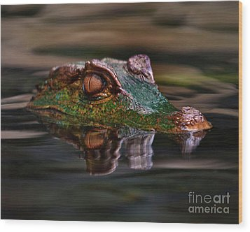 Alligator Above Water Reflection Wood Print