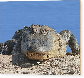 Wood Print featuring the photograph Alligator Approach .png by Al Powell Photography USA