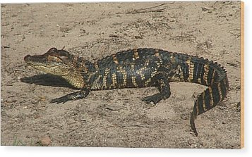 Alligator Baby Wood Print