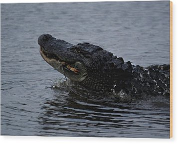 Alligator Eating A Crab Wood Print