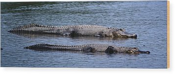 Alligator Pair Wood Print