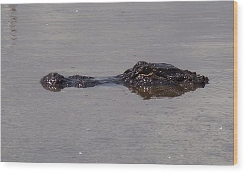 Alligator Profile Wood Print