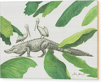 Alligator With Pelicans Wood Print by Juan Bosco