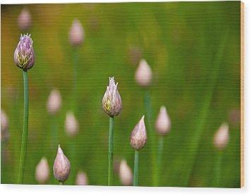 Wood Print featuring the photograph Allium Plants by Monte Stevens
