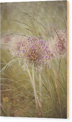 Allium Purple Sensation Wood Print by Jacky Parker Photography