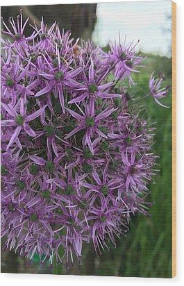 Allium Stars  Wood Print