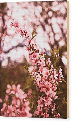 Almonds1 Wood Print