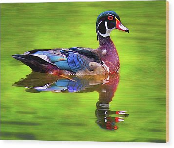 Wood Print featuring the photograph Almost Perfect Wood Duck by Jean Noren