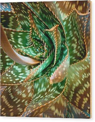 Aloe Saponaria, Soap Aloe Maculata Wood Print by Frank Tschakert