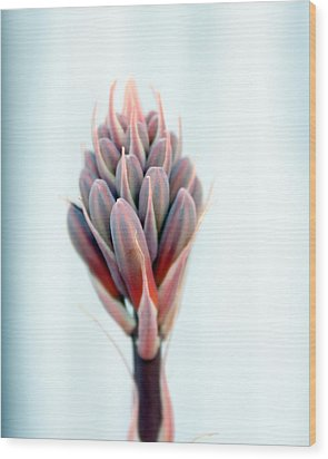 Aloe Vera Bloom Wood Print by Evelyn Patrick