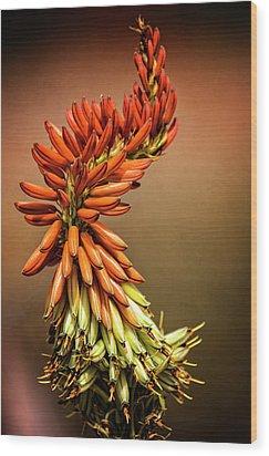 Wood Print featuring the photograph Aloe Vera Twist  by Saija Lehtonen