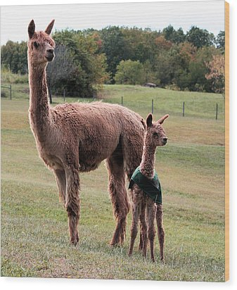 Alpaca And Cria Wood Print