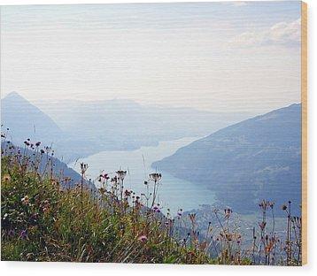 Alpine Flora On Top Of Schynige Platte Wood Print by Ernst Dittmar
