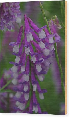 Alpine Vetch 2 Wood Print