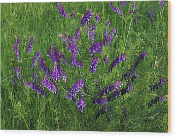Alpine Vetch Wood Print by Robyn Stacey