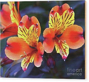 Alstroemeria Indian Summer Wood Print by Stephen Melia