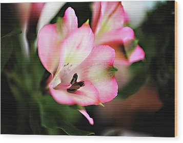 Wood Print featuring the photograph Alstromeria by Carol Kinkead