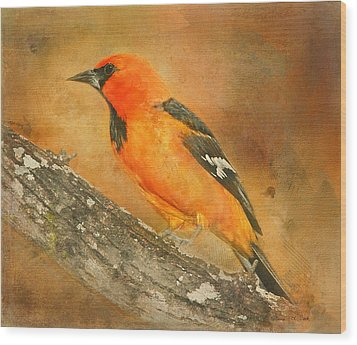 Wood Print featuring the photograph Altamira Oriole by Bellesouth Studio