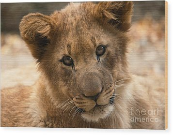 Wood Print featuring the photograph Am I Cute? by Christine Sponchia