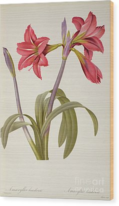 Amaryllis Brasiliensis Wood Print by Pierre Redoute