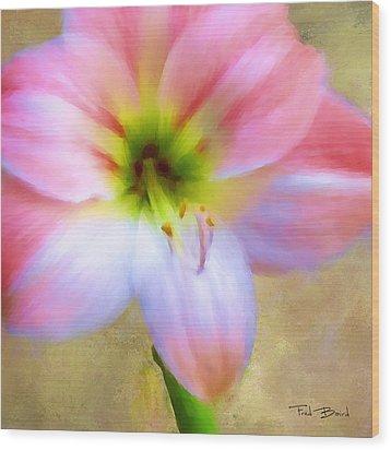 Amaryllis Wood Print by Fred Baird