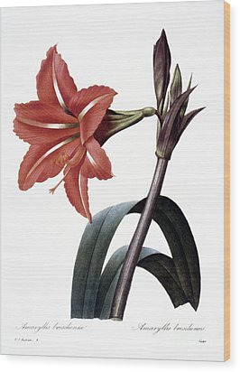 Amaryllis Wood Print by Granger